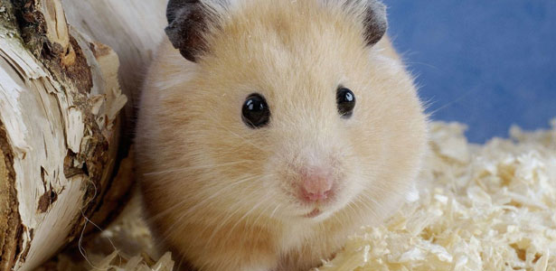 Форум портала Hamster.ru