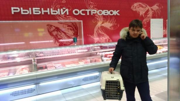 """Сотрудник ХК """"Адмирал"""" держит клетку с кошкой по кличке Матроскин в рыбном магазине © primamedia.ru"""