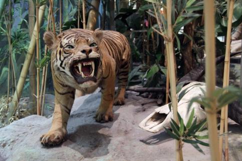 Фотографии диких животных России можно увидеть в Дарвиновском музее