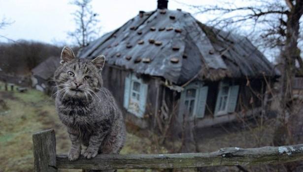 Домашняя кошка по кличке Мурка спасла своего хозяина от гибели при пожаре в Башкирии.