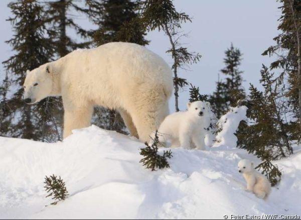 Защитники животных отметили День рождения белых медведей