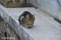 Кошка Машка спасла младенца в Обнинске