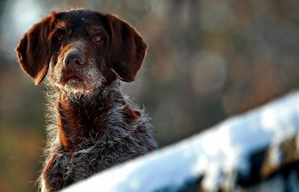 В Госдуму внесен законопроект о запрете приставам изымать домашних животных за долги