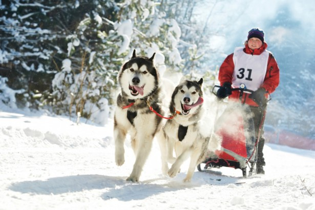 Во Владивостоке прошла гонка на собачьих упряжках
