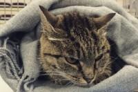 Кошка Матроска из Владивостока, которая в декабре нанесла ущерб местному магазину на общую сумму 63 тысячи рублей, стала героем рекламы.
