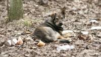 Общественная палата РФ предложила властям Москвы создать зоополицию
