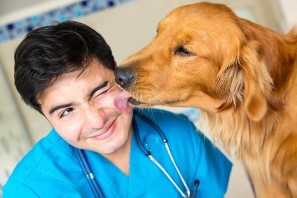 Ученые: Поцелуи с собаками укрепляют иммунитет