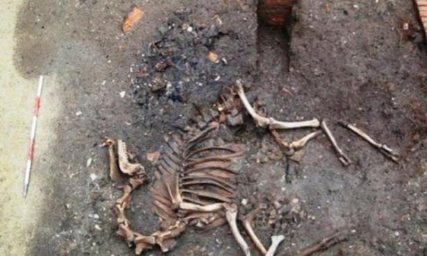 В Австрии археологи нашли скелет боевого верблюда XVII века