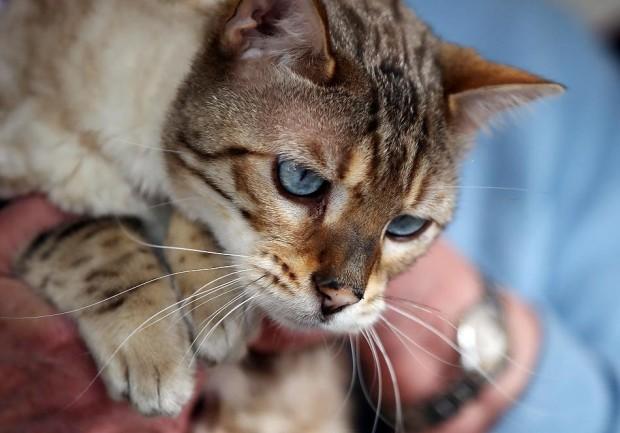 В Германии кот прожил месяц закрытым в ванной