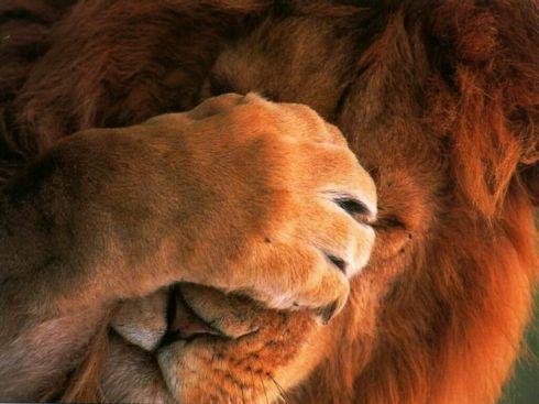 Ученые доказали, что животных совесть не мучает