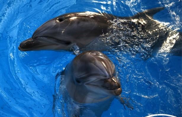 Новый дельфинарий откроется в Москве 5 июня