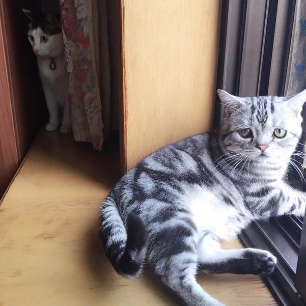 Кошка-пессимист стала новой звездой Instagram