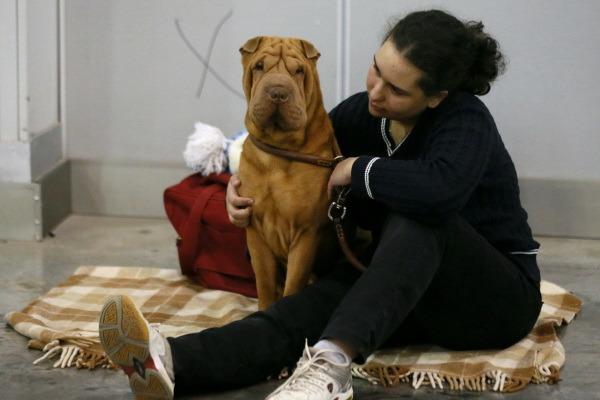 Ученые: Собаки умеют определять отношения между людьми