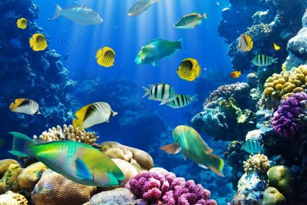 В Австралии обнаружили рыбу с легкими