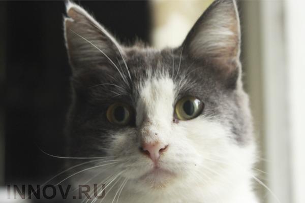 Учёные: большая часть кошек является левшами