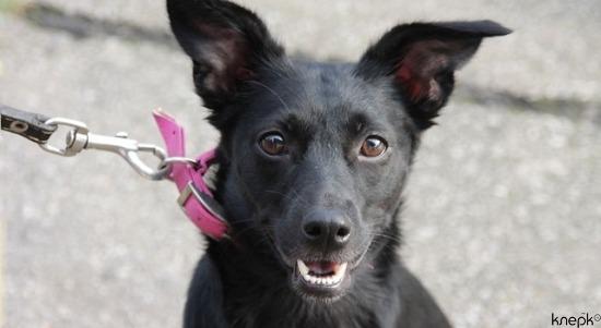 Мосгордума может ввести патенты на разведение домашних животных