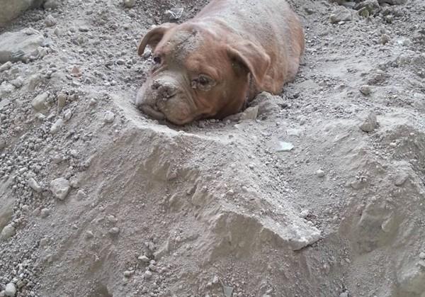 Во Франции мужчина спас похороненную заживо собаку
