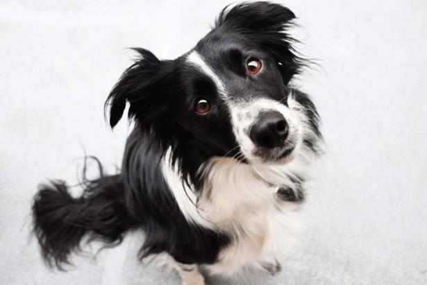 Ученые выяснили, что собаки умеют различать лица
