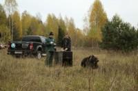 Найденную в Москве медведицу вернули в лес