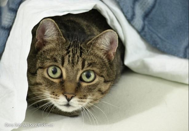 Немецких котов призвали к целомудрию