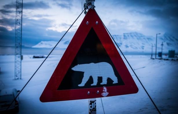 Медведи идут в гости к людям - залезают в форточки на Камчатке и приходят в чумы на Ямале