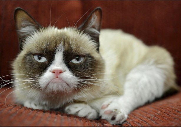 Ученые выяснили, почему кошки более избирательны в еде, чем собаки
