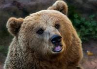 Зона Чернобыля превратилась в заповедник с редкими животными