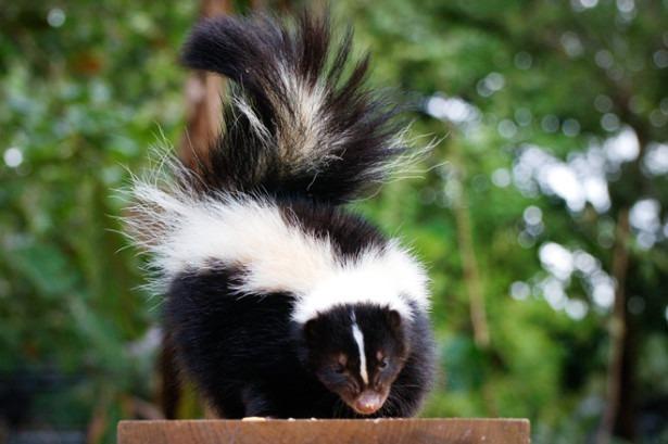 Могут ли животные-дальтоники понять, что их добыча ядовита?