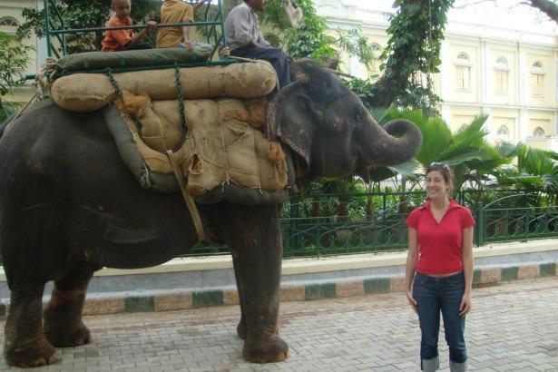 В Индии запретят кататься на слонах