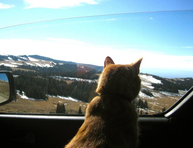 Побег по-кошачьи: из Швеции во Францию за два месяца