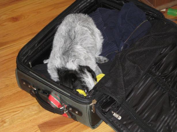 Собаку-зайца выслали из Японии