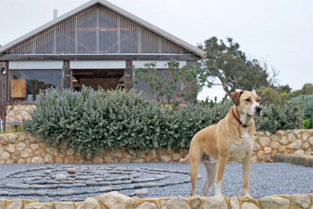 Как живут собачники в России, Америке и Австралии