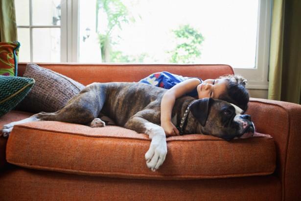 Ученые установили, что собаки не любят обниматься