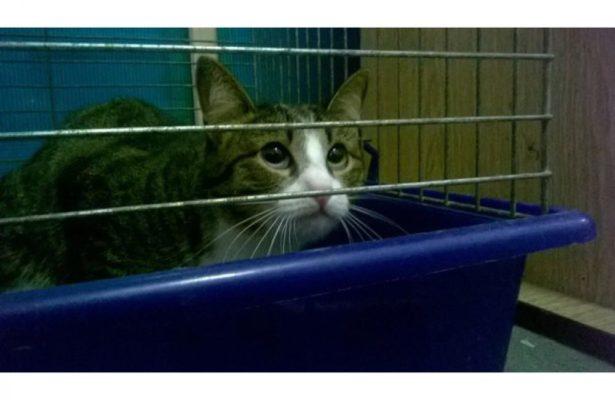 Новокузнечане подбрасывают животных в ветеринарные клиники