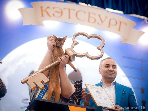Международная выставка кошек «Кэтсбург-2017» состоится 4–5 марта в Московском выставочном центре «Крокус Экспо» (1-й павильон, 4-й зал).