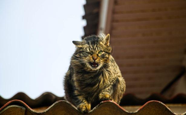 Исследователи протестировали 4 кошачьих эйфоретика