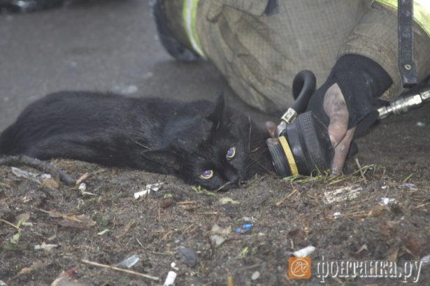 В квартирном пожаре на Тухачевского спасли кота