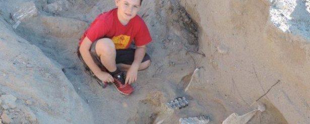 В Нью-Мексико школьник нашел останки древнего стегомастодона