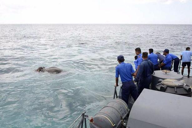 Ланкийские моряки спасли унесенного в море слона