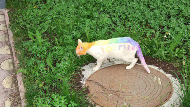 В Тюмени кота раскрасили в цвета радуги