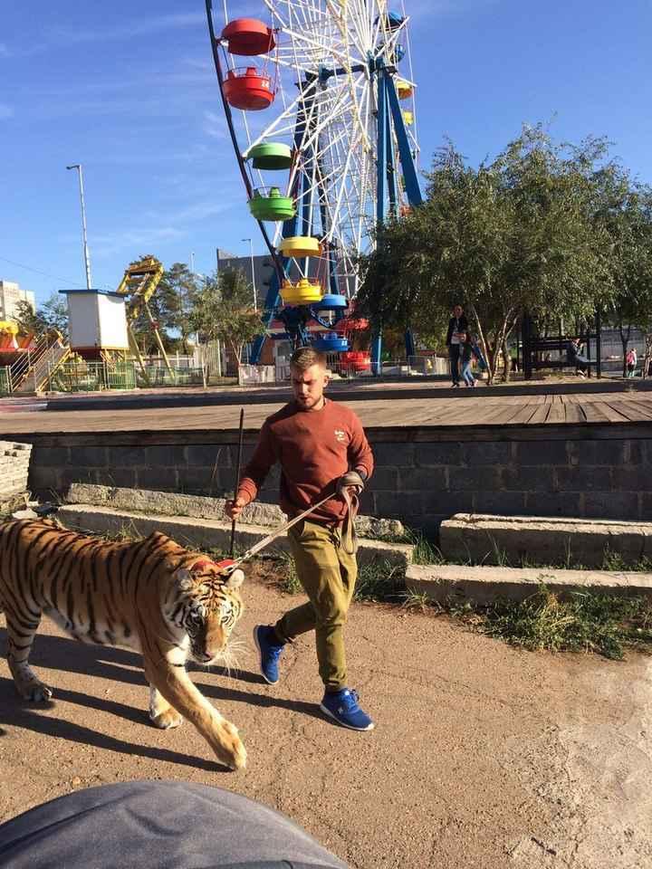 Тигры в городе: по улицам Улан-Удэ разгуливает хищное животное