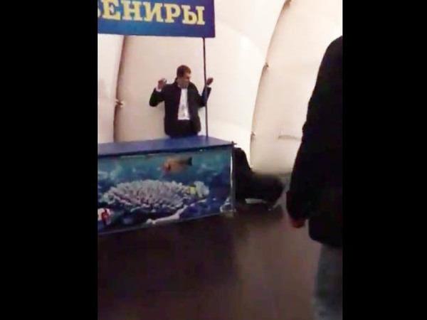 Морской котик из Купчино задержал взломщика дельфинария