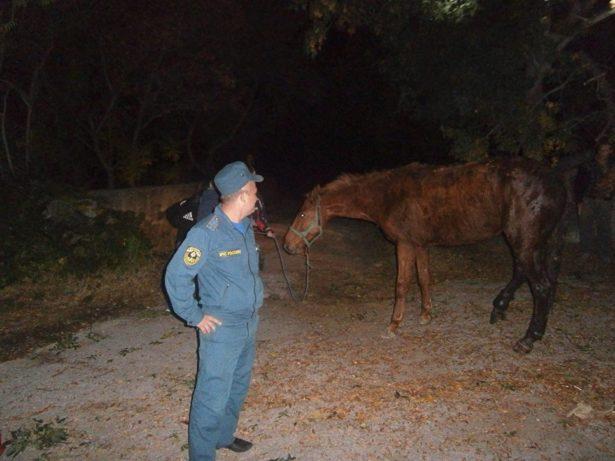 Необычного пострадавшего извлекли крымские спасатели из ялтинской канализации