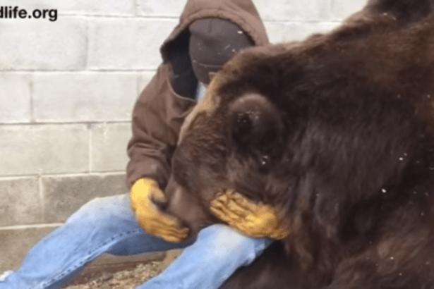 Обнимающий огромного медведя мужчина растрогал Сеть