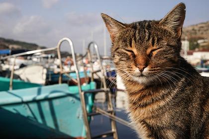 Названы самые популярные коты среди россиян