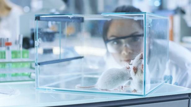 Сибирские ученые случайно вывели мышей, которые не страдают аллергией